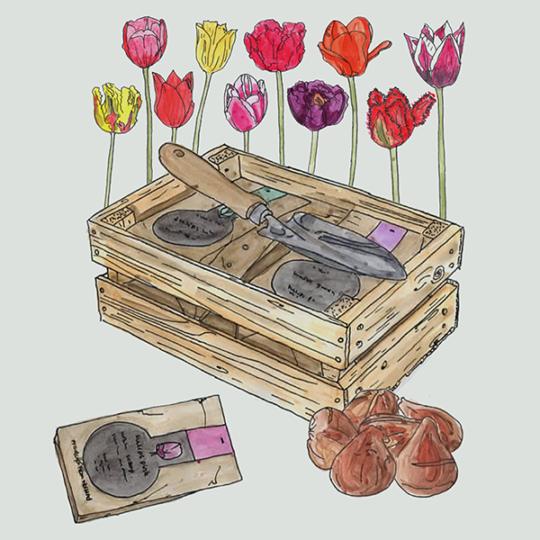 bollenkratje met tulpenbollen