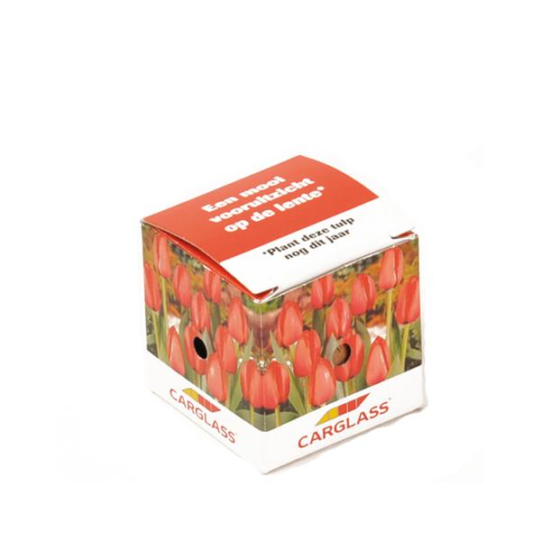 Mini Blumenzwiebel Box