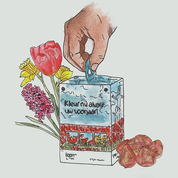Blumenzwiebelbox eigenes Design