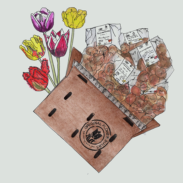 bloembollenpakket gouden eeuw