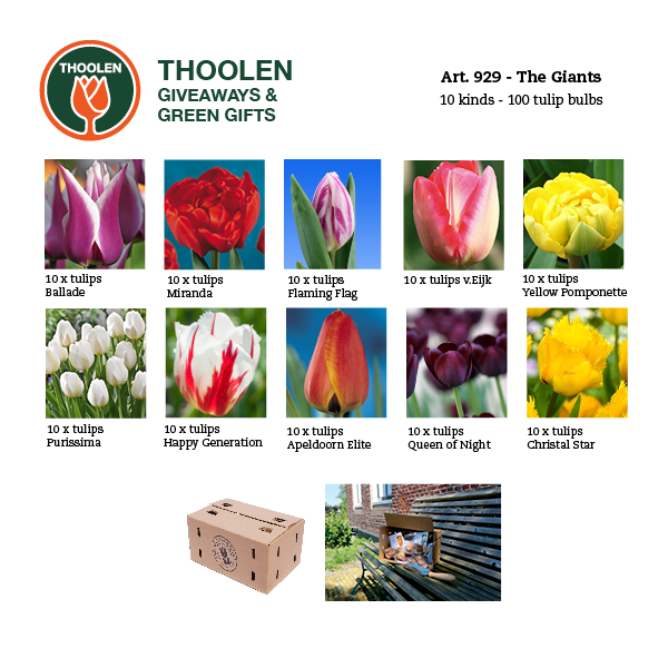 929-giants-bloembollenpakket