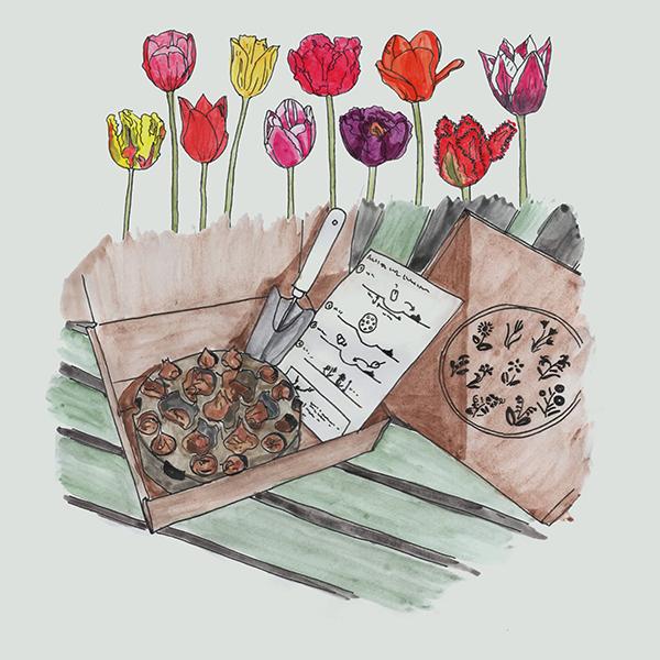 easyplantset duurzaam met bloembollen
